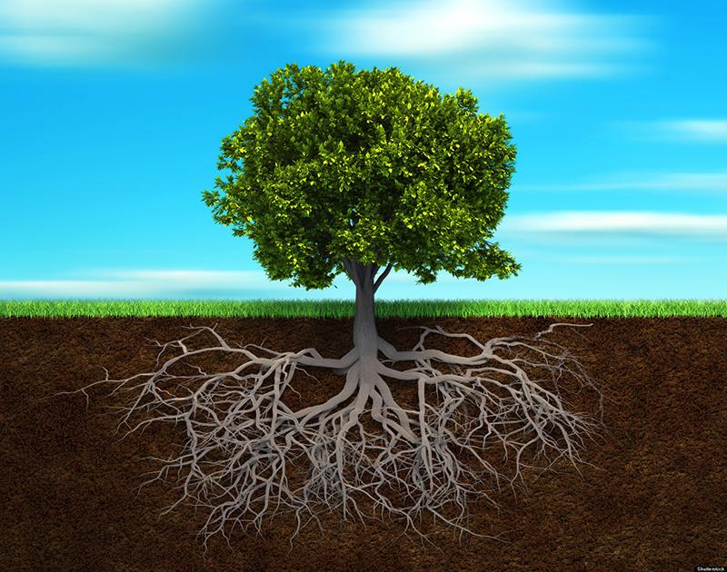 tree-roots-web