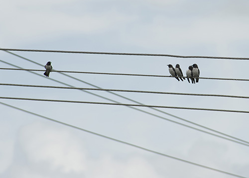 a conceptual image featuring five birds on power lines one bird isolated from the other group of birds